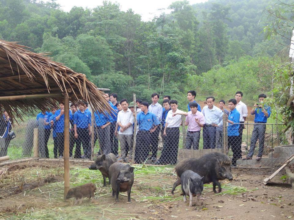 Với phong trào thanh niên lập thân lập nghiệp, nhiều đoàn viên thanh niên Nghệ An làm giàu từ mô hình kinh tế trang trại (Trong ảnh là ĐVTN tham quan mô hình nuôi lợn rừng ở Quỳ Châu, Nghệ An).