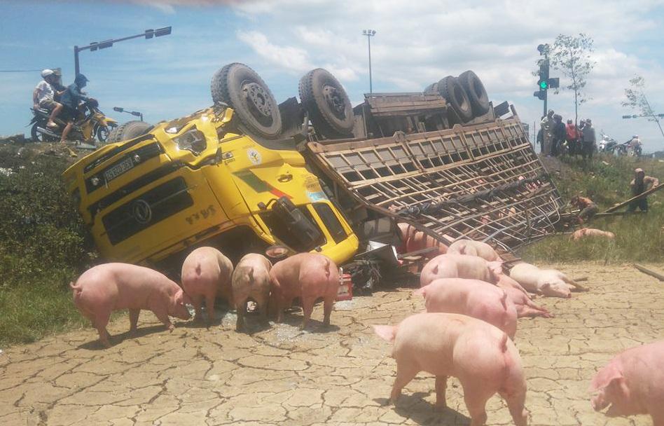 Thùng xe bị hư hỏng, hàng chục con lợn mắc kẹt trong thùng, số còn lại thoát ra ngoài.