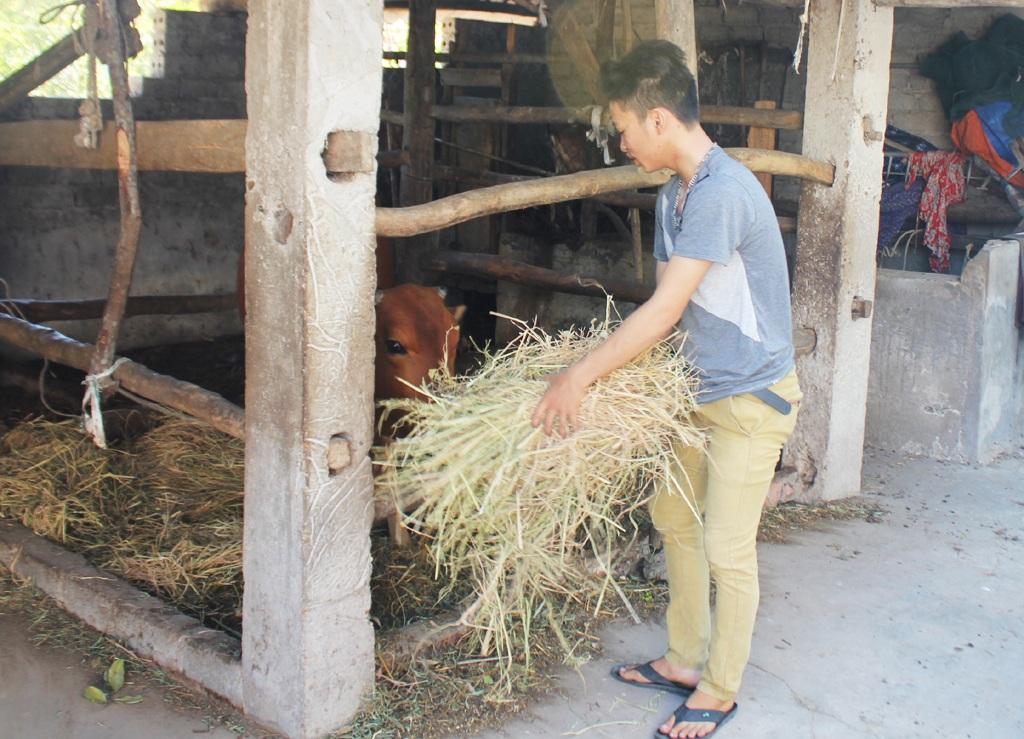 Mẹ đi đóng bầu đất ươm cây giống thuê, ngoài giờ học, anh em Kiệt chăm sóc con bò và đàn dê - số tài sản lớn nhất của 3 mẹ con.