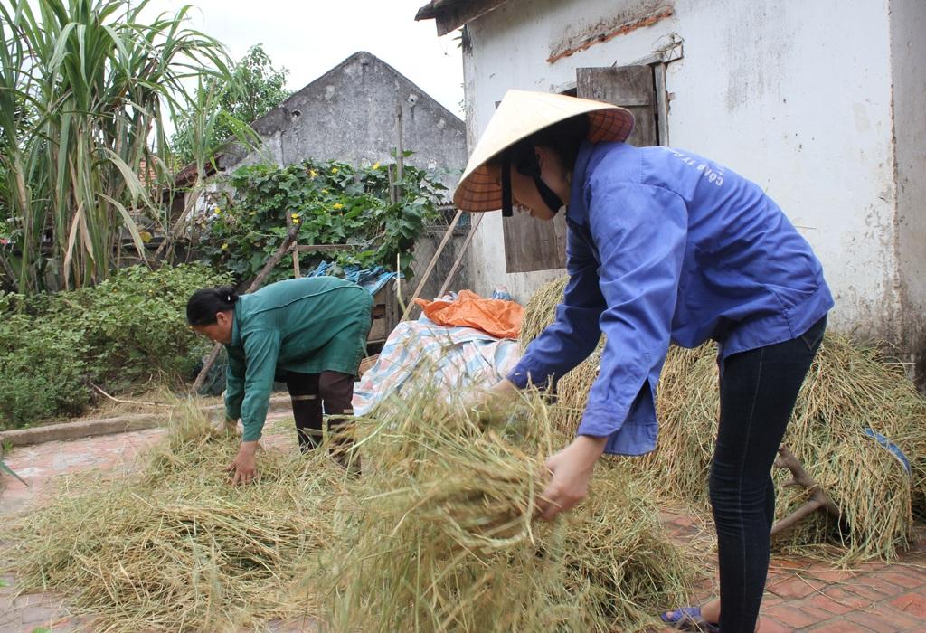 Trang giúp mẹ bòn những hạt lúa chét bởi quê em mỗi năm chỉ trồng được 1 vụ lúa do thường xuyên bị ngập lụt vào tháng 8.