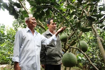 Lão nông Hai Hoa hướng dẫn kỹ thuật trồng bưởi cho một nông dân đến từ Vĩnh Long