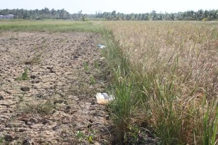 Tình hình hạn, mặn ở các tỉnh ven biển khu vực ĐBSCL ngày càng gay gắt