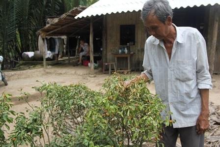 Những cây quất của gia đình ông Nghi bị héo lá, chết dần do tưới nước mặn