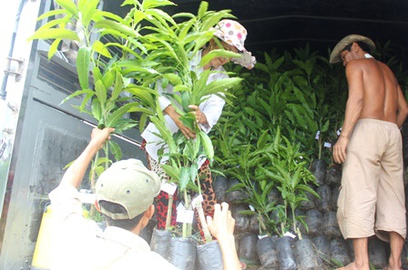 Vận chuyển cây giống cung ứng ra thị trường