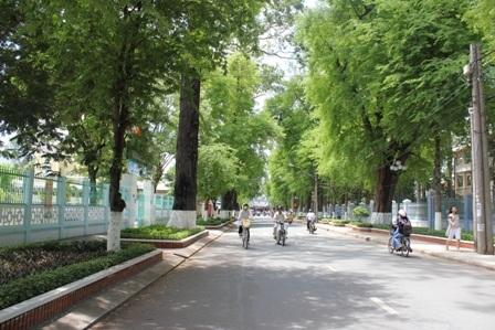 Cây xanh ở TP Trà Vinh sẽ được đầu tư kinh phí để chăm sóc, bảo vệ tốt hơn