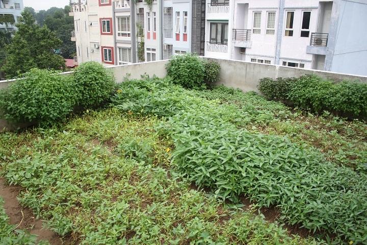 Vườn rau độc đáo này được Ông Chính thiết kế ngay trên sân thượng tầng 3 của gia đình