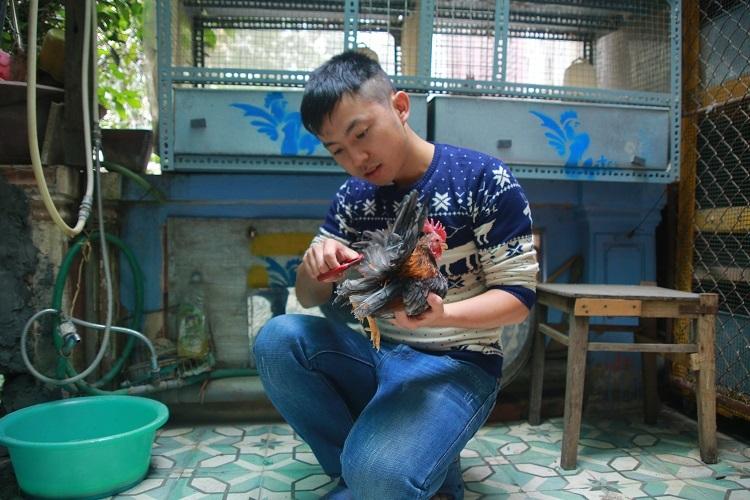 Mỗi ngày, ngoài việc dành thời gian cho gà tắm nắng, anh Huế còn dành từ 1-2 tiếng để massage, luyện cho gà cho các dáng đứng khác nhau.