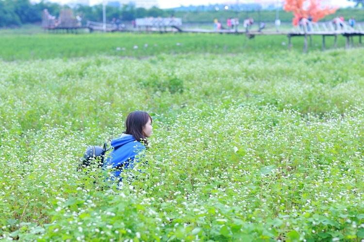 Rất nhiều lối đi được tạo ra bởi những cây hoa đã bị giẫm đạp khiến cánh đồng hoa xơ xác
