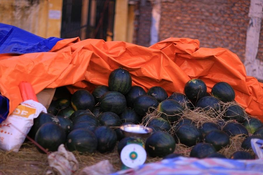 Những quả dưa được chọn là những quả dưa tròn, vỏ xanh thuộc giống dưa An Tiêm