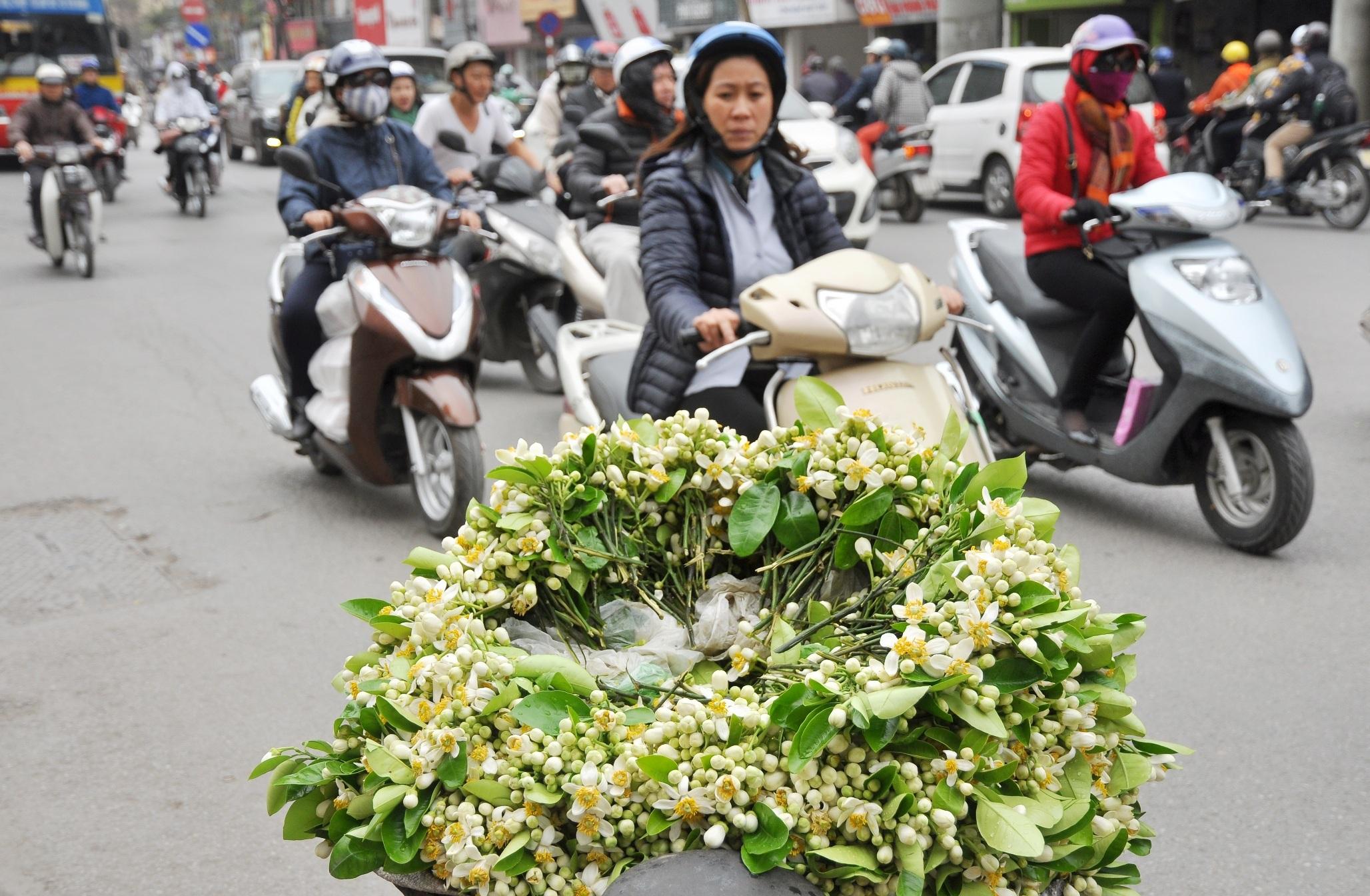 Hoa bưởi được bán nhiều nhất trên những con phố như: Giảng Võ, Đồng Xuân, Nghĩa Tân... Để lựa được những cánh hoa đẹp nhất, người bán phải thức dậy từ sáng sớm, khi những giọt sương vẫn con e ấp trên những cánh hoa, sau đó bó lại thành từng chùm mang ra chợ bán