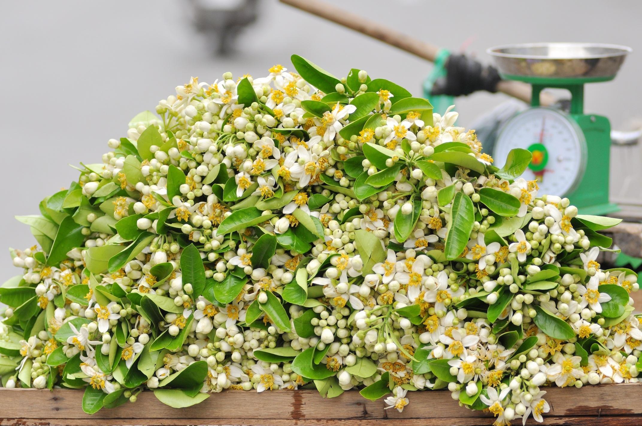 Những gánh hàng rong chở hoa bưởi làm nên nét chấm phá rất riêng cho Hà Nội