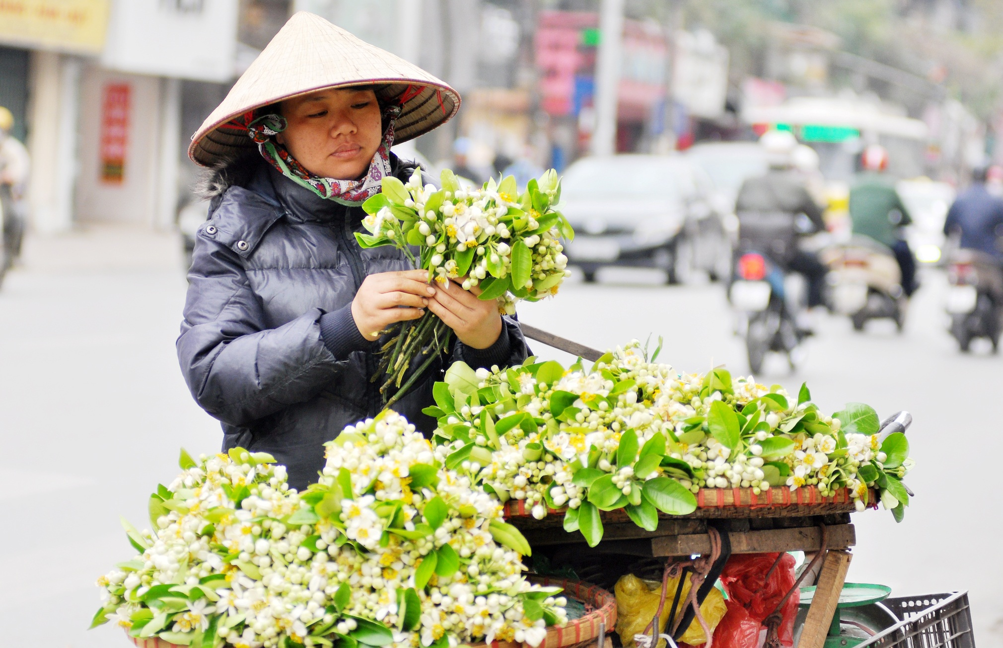 Những ngày này, trên những gánh hàng rong lại ngập tràn sắc trắng tinh khôi của hoa bưởi. Người ta chời đợi mùa hoa bưởi, như chờ đợi cả khúc giao mùa với chút lãng đãng, bình yên trên từng gánh hàng rong chở hoa trắng muốt