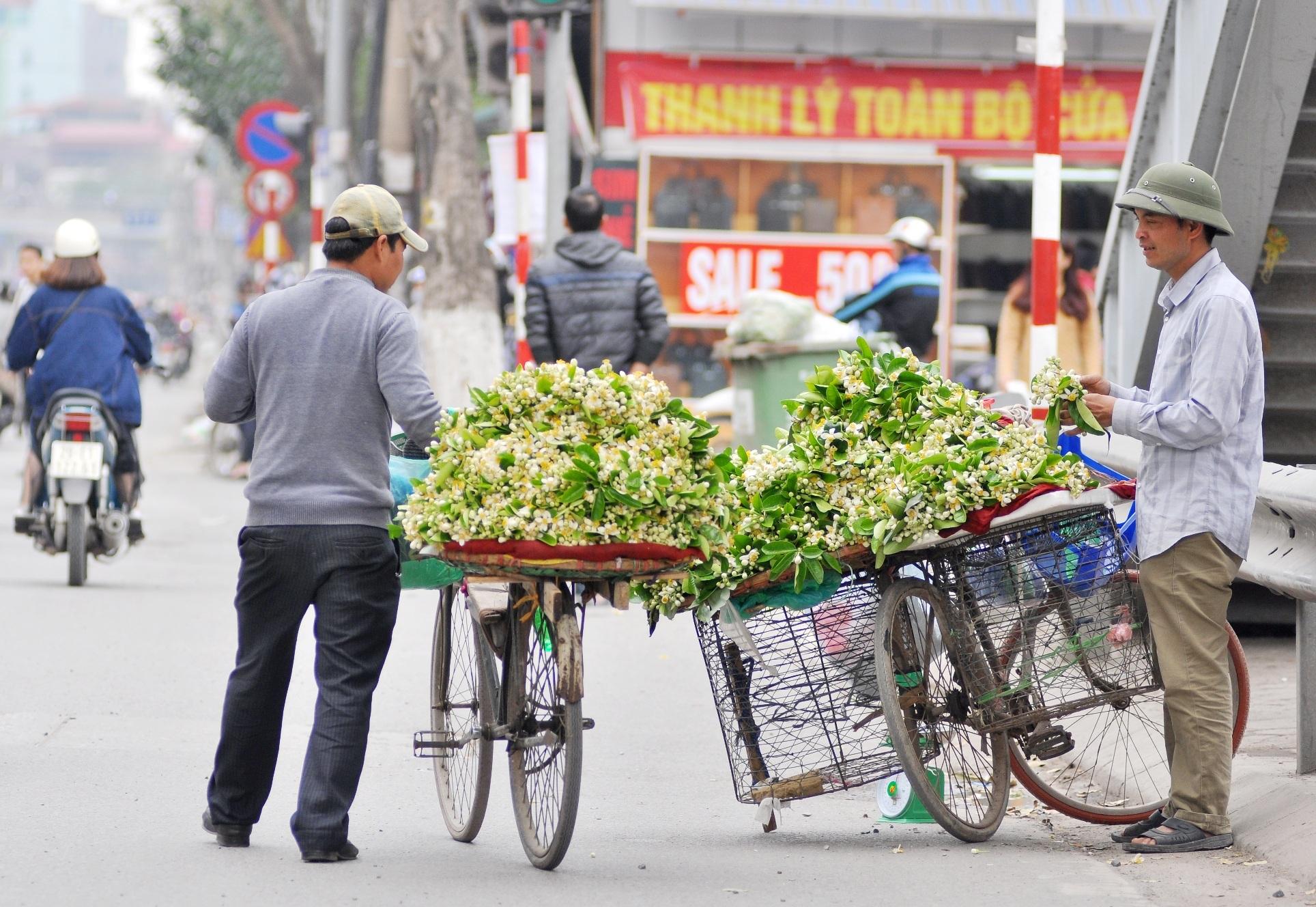 Hoa bưởi có hương thơm nồng nàn, vì thế với nhiều người, việc đi dạo trên những con phố bán hoa bưởi mùa này cũng đủ làm thỏa mãn thú thưởng hoa của họ