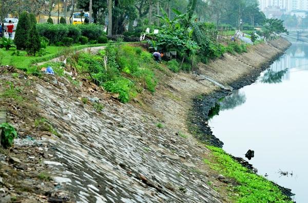 Khoảng vài năm trở lại đây, nhiều gia đình sống cạnh sông Tô Lịch (Hà Nội) đã tận dụng những khoảng trống ít ỏi ở hai bên bờ sông để gieo hạt, trồng rau xanh cung cấp cho bữa ăn gia đình