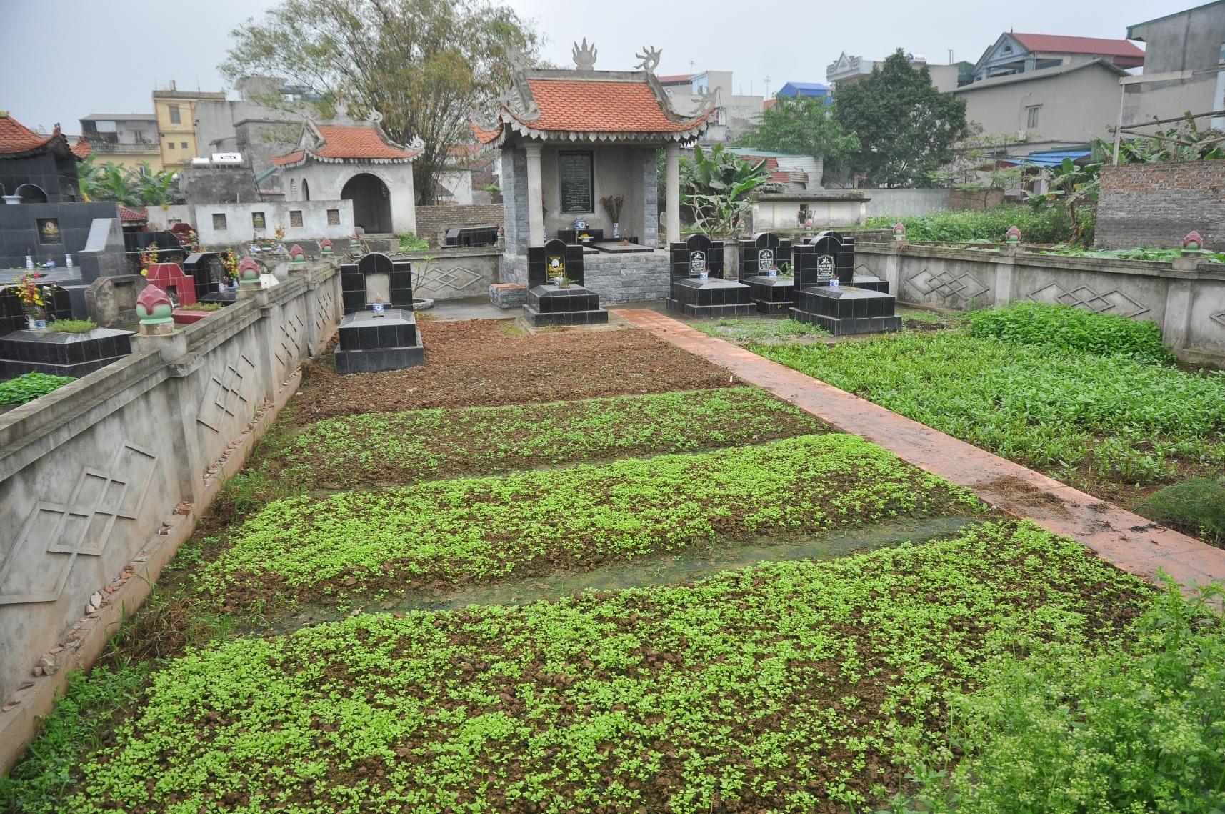 Khu vực đất thuộc nghĩa trang của huyện Thường Tín cũng được người dân tận dụng để trồng đủ các loại rau.