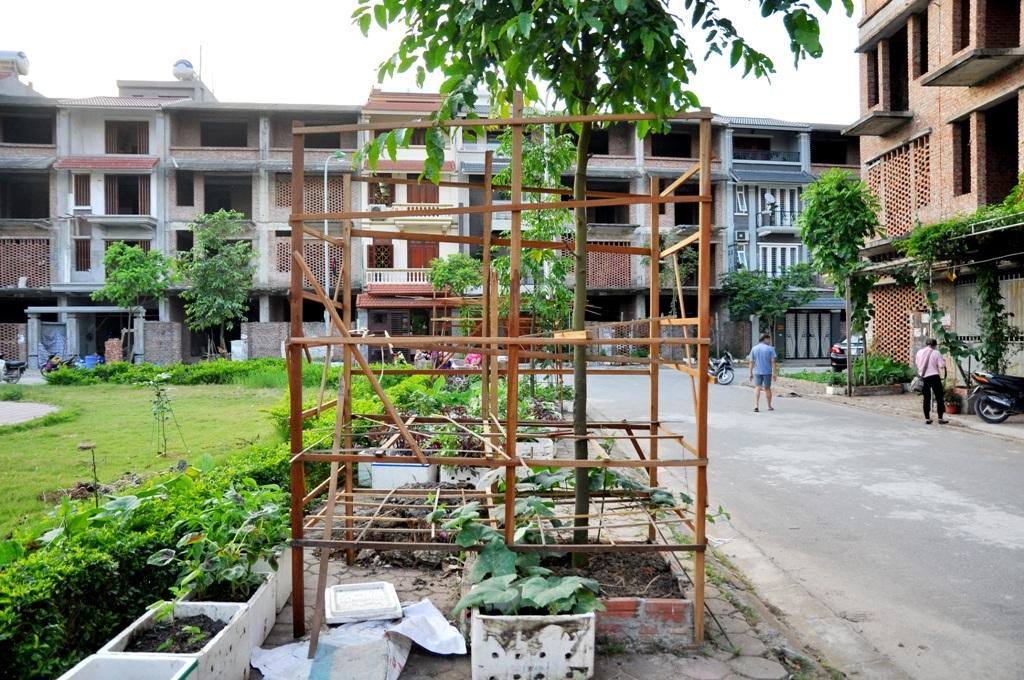 Một gốc cây trong công viên được quây rào, trồng rau bí.
