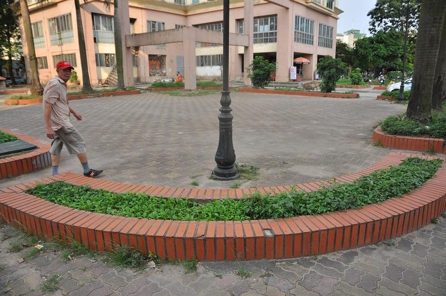 Khuôn viên vườn hoa trong khu đô thị Định Công (Hà Nội) cũng được người dân trồng kín các loại rau.