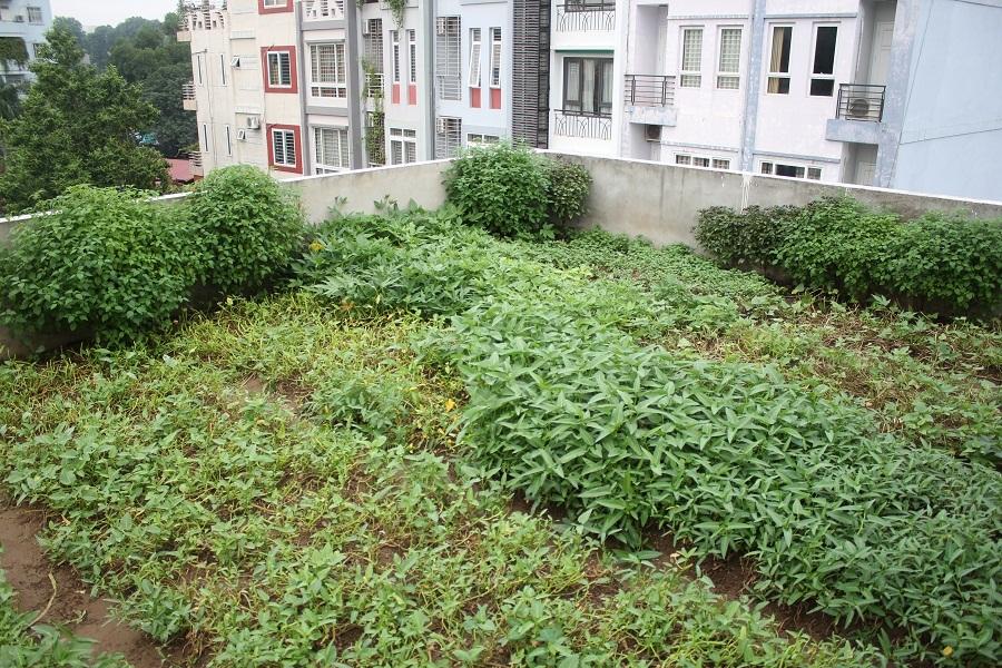 Muôn kiểu trồng rau sạch độc đáo của người Hà Nội - 13