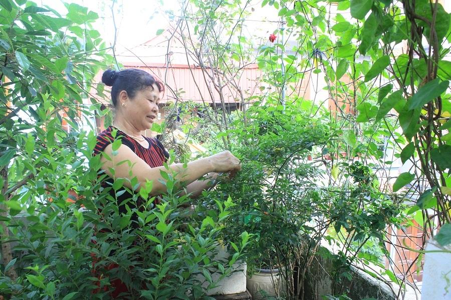 Vườn rau trên sân thượng của gia đình bà Trần Thị Toàn ở Tập thể Tổng cục II, Xuân Tảo, Bắc Từ Liêm (Hà Nội). Trên khoảng không gian rộng khoảng 40m2, bà Toàn trồng đủ các loại rau từ: bầu, bí, đu đủ, ớt, chanh đến các loại rau ngắn ngày như: mùng tơi, rau đay, cải, ngót… Vườn rau nhà bà Toàn đủ cung cấp thực phẩm cho gia đình gồm 6 thành viên nên gần như bà Toàn không phải đi chợ bao giờ.