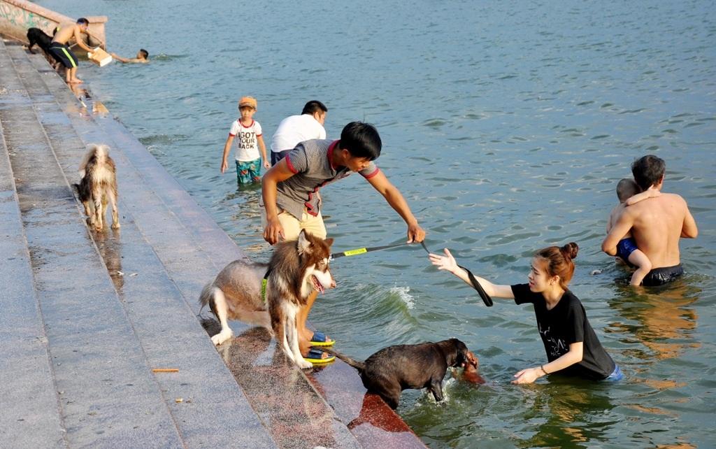 Nhiều chú chó tỏ vẻ phấn khích khi được tắm mát sau một ngày dài nắng nóng, oi bức.