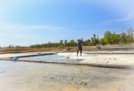 """""""Bóng muối"""" trên cánh đồng muối ở Quảng Nam - 2"""