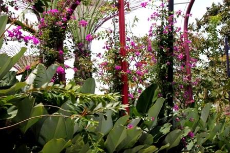 Các loài hoa trong công viên
