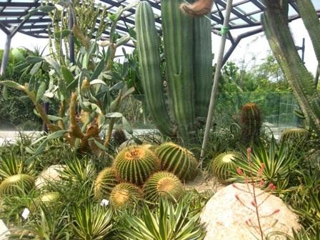 Khám phá công viên Garden by the Bay ở Singapore - 5