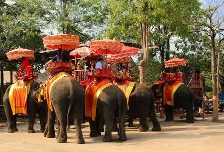 Nhiều du khách cưỡi voi đủng đỉnh đi dạo trên những con đường rợp bóng cây cổ thụ dẫn vào thành cổ.