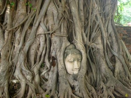 Điều thú vị khi tới Wat Mahathat là ở đó có một đầu tượng Phật bằng đá được chùm rễ cây cổ thụ ôm trọn