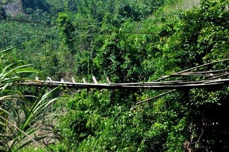 Hiện trên địa bàn huyện Nam Trà My có cả trăm cây cầu treo được người dân xây dựng xuống cấp trầm trọng. Tuy nhiên, nhiều cây cầu vẫn phát huy hiệu quả bởi không đi thì người dân không thể qua được rẫy.