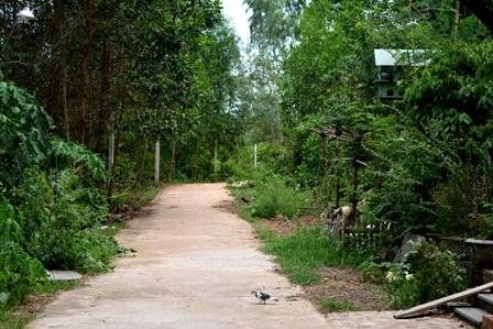 Con đường dẫn vào làng