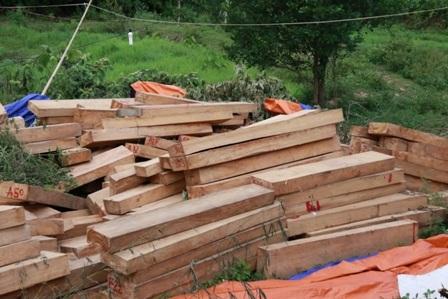 Số gỗ pơmu được đưa về đồn Công an Chà Vàl để điều tra
