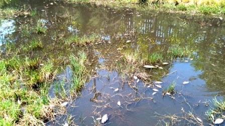 Cá chết do nước xả thải của nhà máy Sô đa Chu Lai