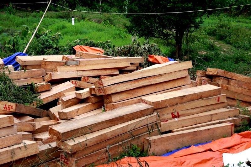 Số gỗ pơmu được phát hiện đến nay đã lên đến trên 750 phách