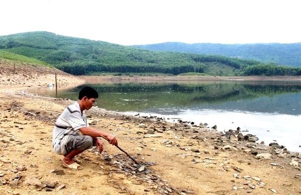 Anh Nguyễn Văn Duyên đang thu gom xác cá chết