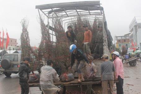 Nhiều phương tiện chở hoa cấp tập đổ về TP Đông Hà