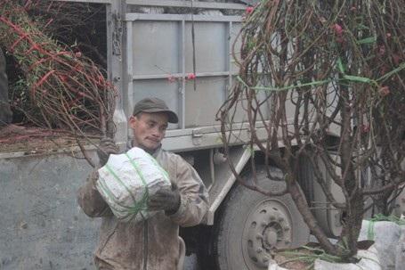 Vận chuyển hoa từ xe tải xuống bày bán