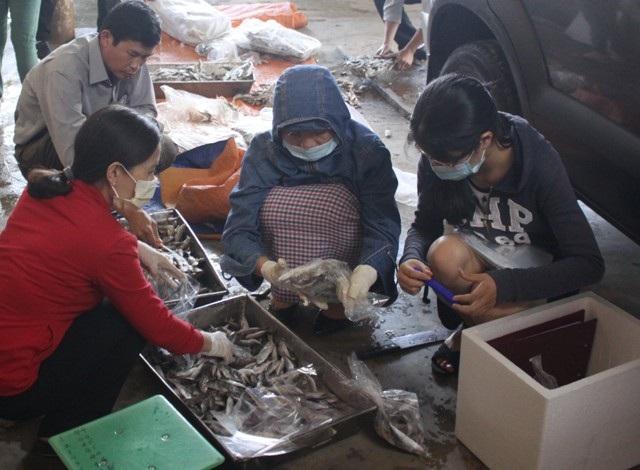 Đoàn kiểm tra phân nhỏ lô cá và lấy mẫu đi kiểm nghiệm