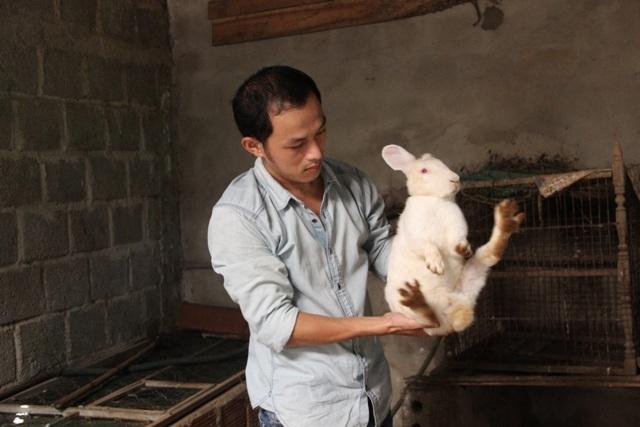 Anh Phương đang nuôi hàng chục con Thỏ theo hình thức thả vườn