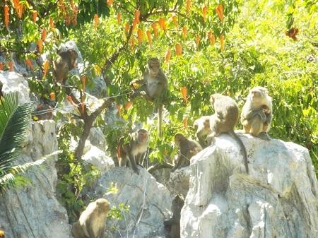 Đảo Khỉ, Nha Trang