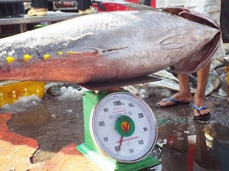 Nhập cá ngừ đại dương ở cảng cá Hòn Rớ (TP Nha Trang) - Ảnh: Viết Hảo