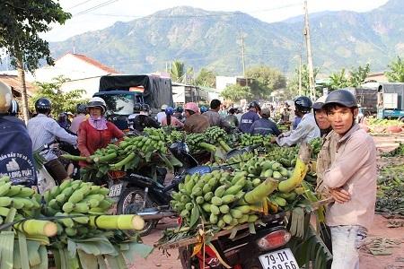 Phiên chợ chuối đầu mối xã Suối Cát (huyện Cam Lâm, tỉnh Khánh Hòa) chỉ họp vào dịp cận Tết nguyên đán. Chợ họp rất nhộn nhịp từ sáng sớm kéo dài đến trưa.