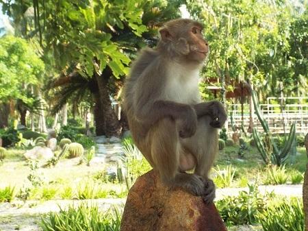 Ông Lê Phú Điệp, Đảo trưởng Đảo Khỉ Nha Trang, cho biết, đàn khỉ trên đảo được đưa từ đất liền ra đảo từ đầu những năm 1980. Người ta phân biệt khỉ ở đây thành 3 loại theo đặc điểm bên ngoài, gồm: Khỉ mặt đỏ, đuôi ngắn, đít đỏ; khỉ đầu chóp, đuôi dài và khỉ mặt sư tử.