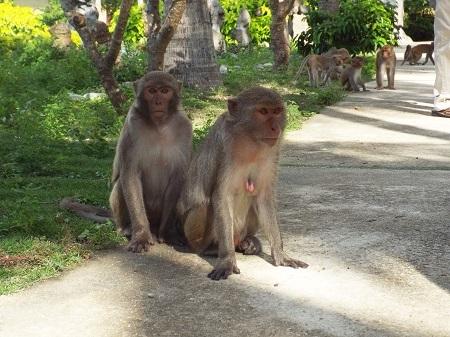 Ban đầu khi mới đưa ra đảo, khỉ được nhốt trong lồng sắt nhưng sau đó chúng phá cửa chui ra. Để dễ chăm sóc và hạn chế sự phá hoại của đàn khỉ, những người trên đảo đã dùng lưới B40 ngăn đôi hòn đảo, lùa khỉ về phía Đông, còn phía Tây phục vụ cho việc đón khách đến thăm. Hiện nay chú khỉ lớn tuổi nhất trên đảo là 33 tuổi