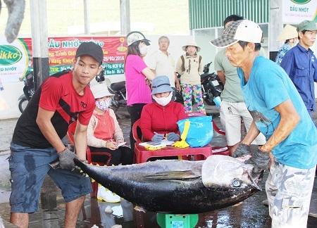 Hoạt động mua bán cá ngừ đại dương ở Cảng Hòn Rớ (TP Nha Trang) diễn ra nhộn nhịp từ mờ sáng đến trưa cùng ngày. Việc ngư dân trúng đậm cá ngừ đại dương sẽ tạo công ăn việc làm cho hàng trăm người dân địa phương ở cảng cá này