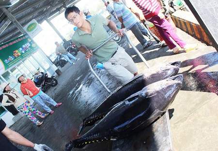 Cá ngừ đại dương sau khi thu mua ở Nha Trang sẽ được cấp đông trên xe đông lạnh và chuyển đi tiêu thụ ở các tỉnh lân cận và các tỉnh, thành phía Nam
