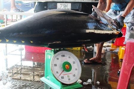 Mỗi con cá ngừ đại dương ở Trường Sa có thể nặng tới 65kg, với giá bán tại cảng Hòn Rớ (TP Nha Trang) dao động 93.000-95.000 đồng/kg.