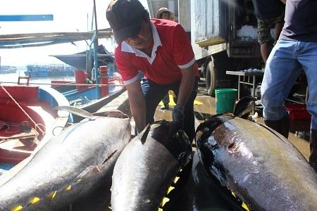 Ngư trường Trường Sa, Nhà giàn DK1... là ngư trường thuyền thống của ngư dân Khánh Hòa nói riêng và các tỉnh Nam Trung Bộ nói chung. Việc trúng đậm cá ngừ đại dương, ngoài viêc nâng cao thu nhập sẽ khuyến khích ngư dân bám biển Trường Sa thường xuyên