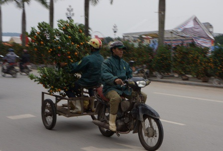 Chiếc xe lôi tự chế có thể chở được cả cây cảnh và người ngồi sau rất thuận tiện. Người ngồi sau có nhiệm vụ giữ cây thăng bằng, không bị lật