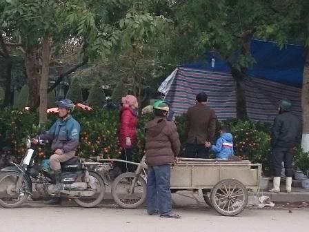 Tại hầu hết các điểm bán hoa, cây cảnh ở Hội chợ hoa xuân, thành phố Thanh Hóa, những người lái xe thồ luôn sẵn sàng phục vụ khách. Họ chia nhau ra từng điểm một để chờ khách mua hoa, cây cảnh xong nếu có nhu cầu sẽ vận chuyển ngay.